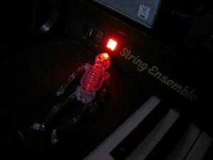 studio skeleton